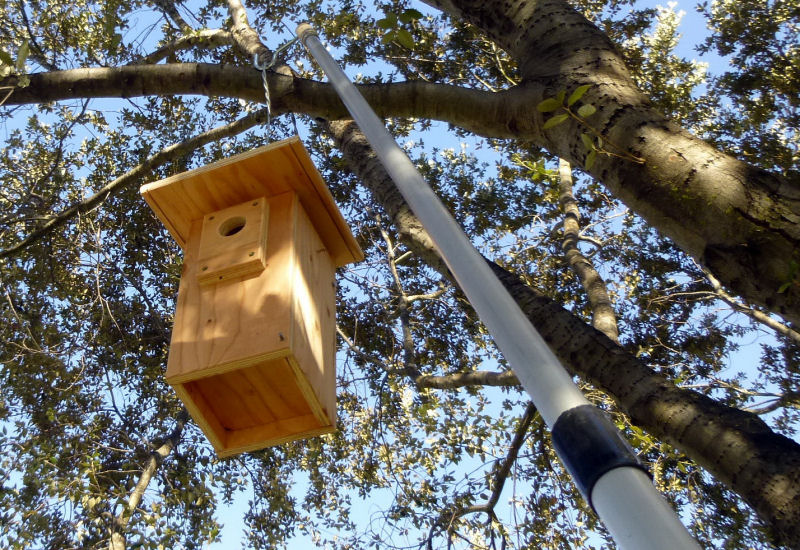 Hanging nestbox Lee Pauser photo